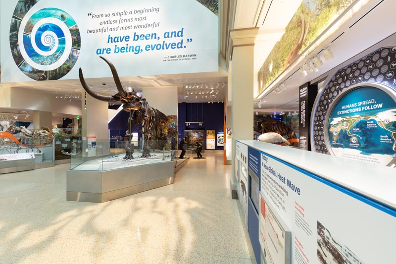 mastodon-fossil-at-nmnh-deep-time-exhibit_credit-smithsonian